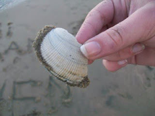 Seashells, what kind of shell is this