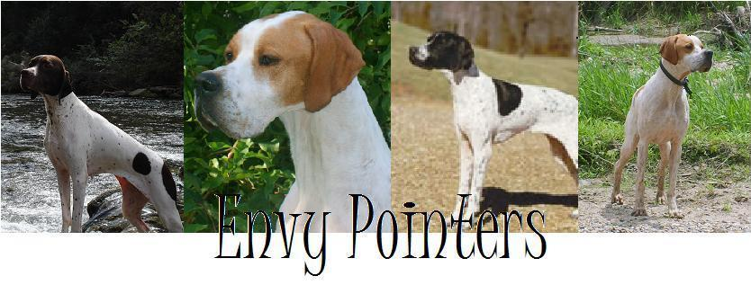 Dogs of Envy Pointers