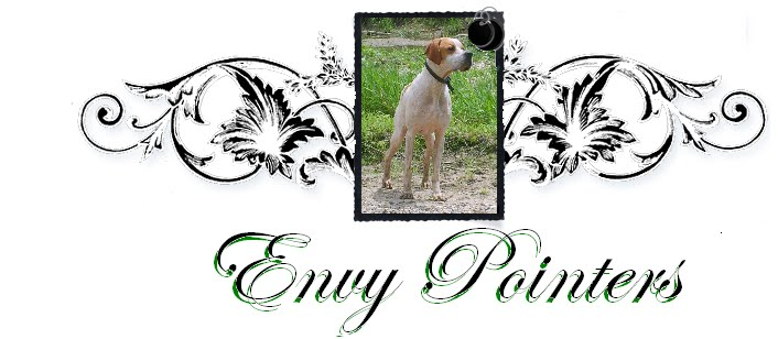 Envy Pointers