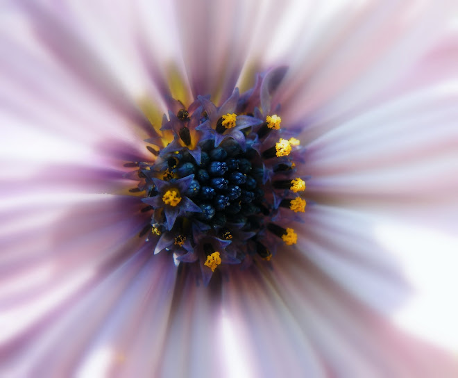 fiore nel fiore