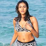 Hot Tollywood Masala Babe Kausha Bikini Images