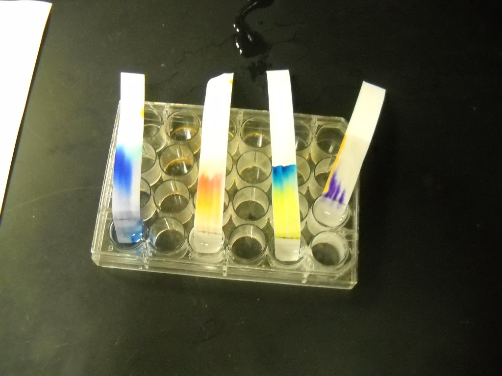 paper chromatography lab