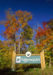 algonquin park entrance fall