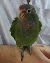 Parrot keeps a blog