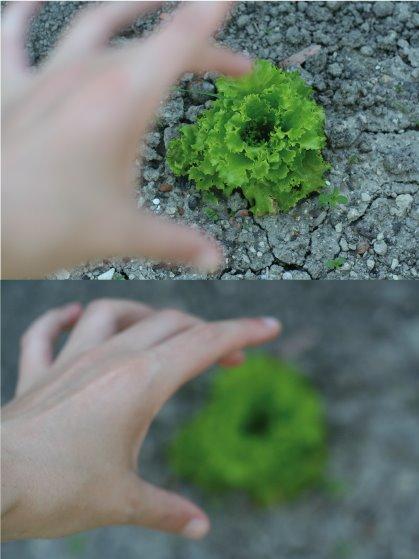 cultives ta salade