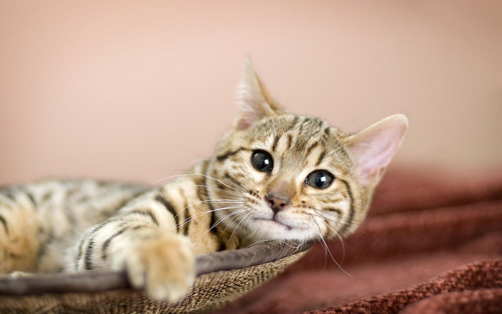 http://2.bp.blogspot.com/_KLJU3hHDGVM/S-lC-7rT5CI/AAAAAAAAB-g/sSQRFjq_X6Q/s1600/cats+%286%29.jpg