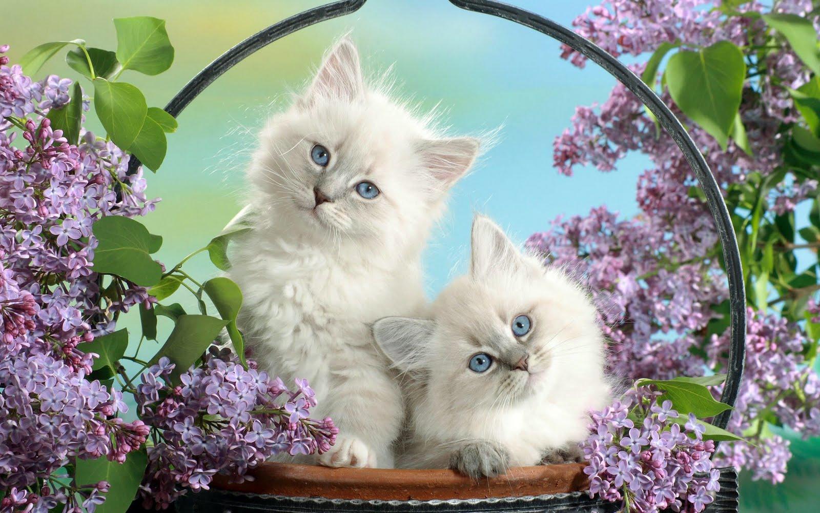 http://2.bp.blogspot.com/_KLJU3hHDGVM/S-lCuYtZ8UI/AAAAAAAAB-Y/hV8su2O5Y70/s1600/cats+%285%29.jpg