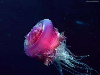 rare creatures of sea