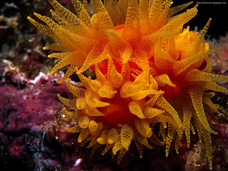 unseen sea creatures pictures