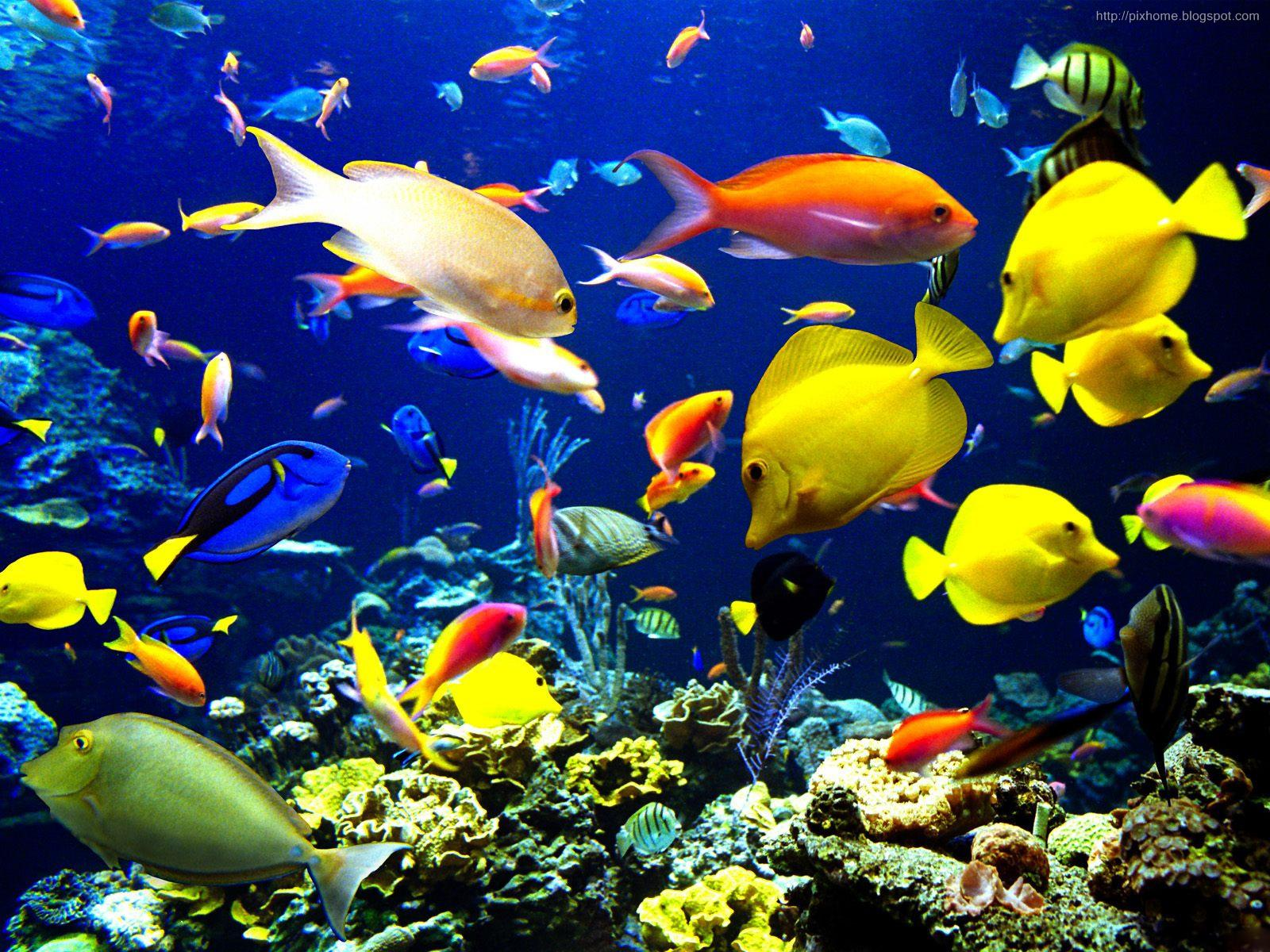 Underwater sea animal creatures plants pictures hq for Wallpaper fish in water