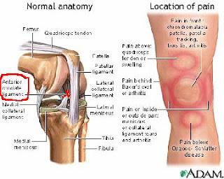 knee chart image