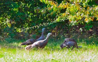 turkeys trotting under trees