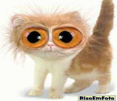 Imagem de gato com olhos esbugalados, alterada por Photoshop.