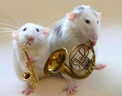 Animais e música: Hamsters com instrumentos de sopro.