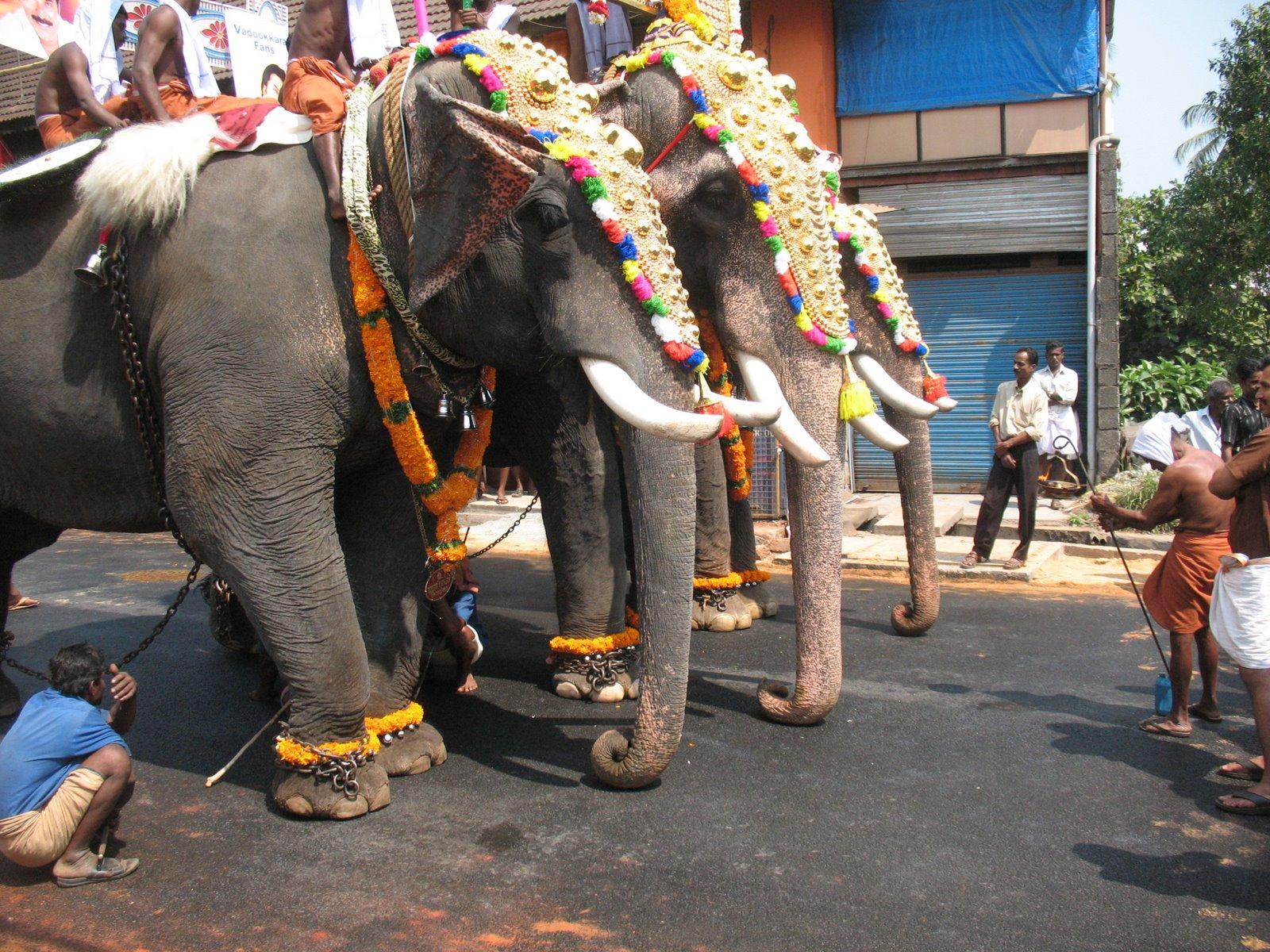 [20090208+Thrissur+Kerala+Harriet+190.jpg]