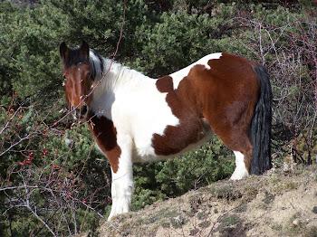Els cavalls del Gons
