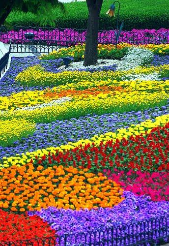 Flower plot garden for Spring flower garden designs