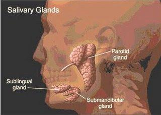Mumps parotitis pada anak dan pencegahan pengobatannya di demak angkatan 87 sma 1 demak