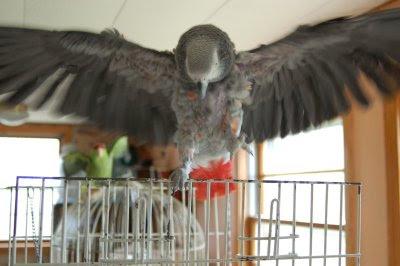 Dancing parrots
