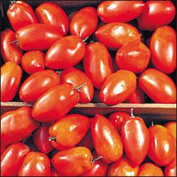 Romanian Spitze Tomato