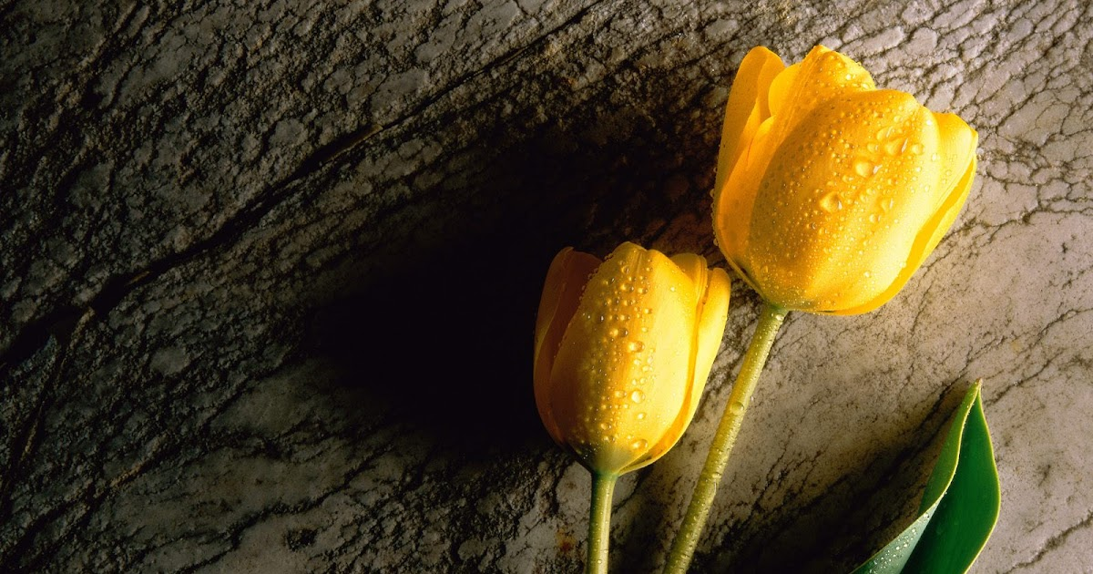 Nice Wallpapers: High resolution Flower wallpapers