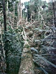 TEMPESTADE NA AMAZÔNIA