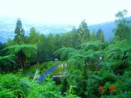 Homestay Suria Apartment Bukit Merah Lake Town Resort Ada Apa Dengan Taiping