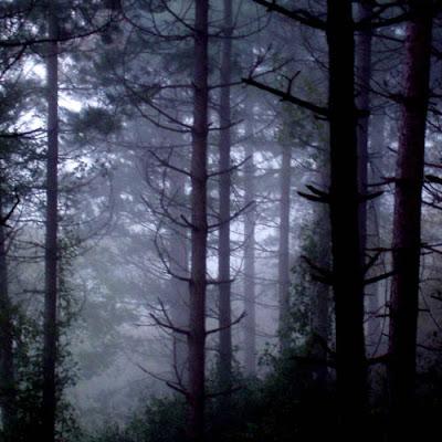 Profundidades del Bosque 405%2520bosque%2520profundo