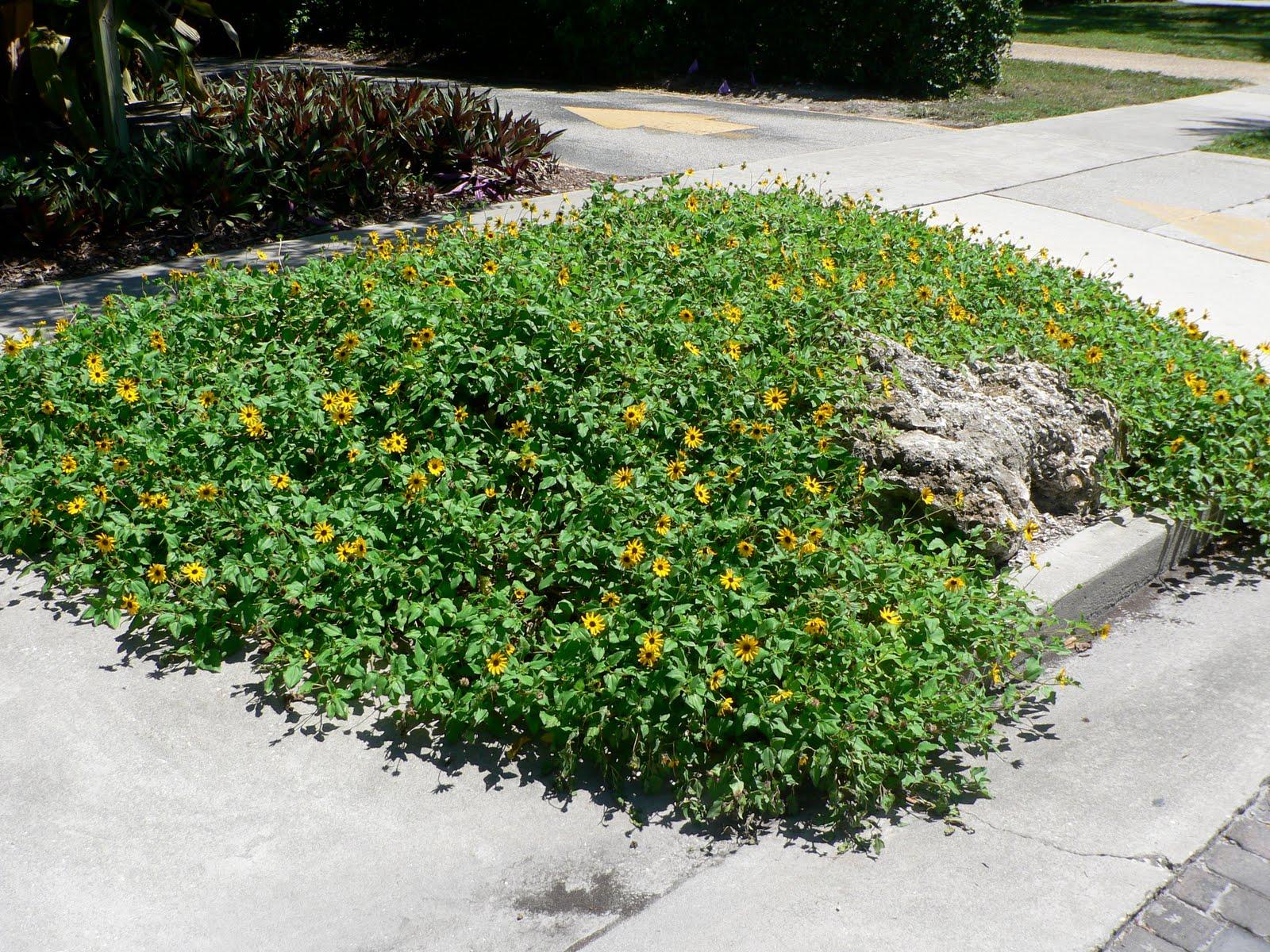 Uf ifas extension polk gardening ten plants that beat for No maintenance perennials
