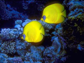 Panqeesitha los animales for Como se llama el hotel que esta debajo del mar