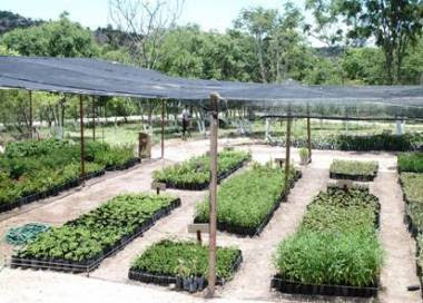 Noticia local jun n inauguran primer vivero forestal de for Proyecto vivero forestal pdf