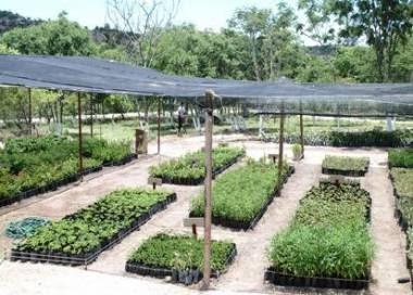 Noticia Local Jun N Inauguran Primer Vivero Forestal De