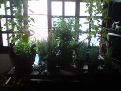 Paisagismo, aprenda tudo sobre jardins e como cuidar de suas plantas