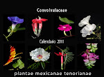 Calendario de Familias Botánicas