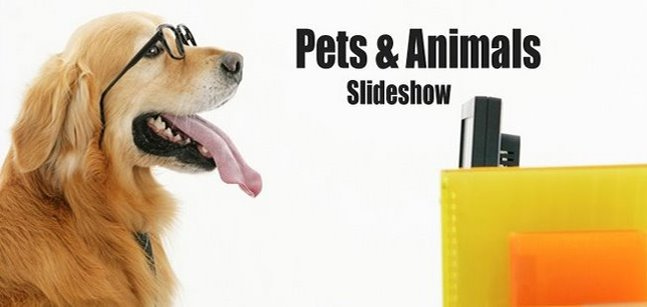 Pets & Animals Slideshow