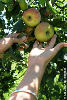Pommes du verger bio de La Chassagnette