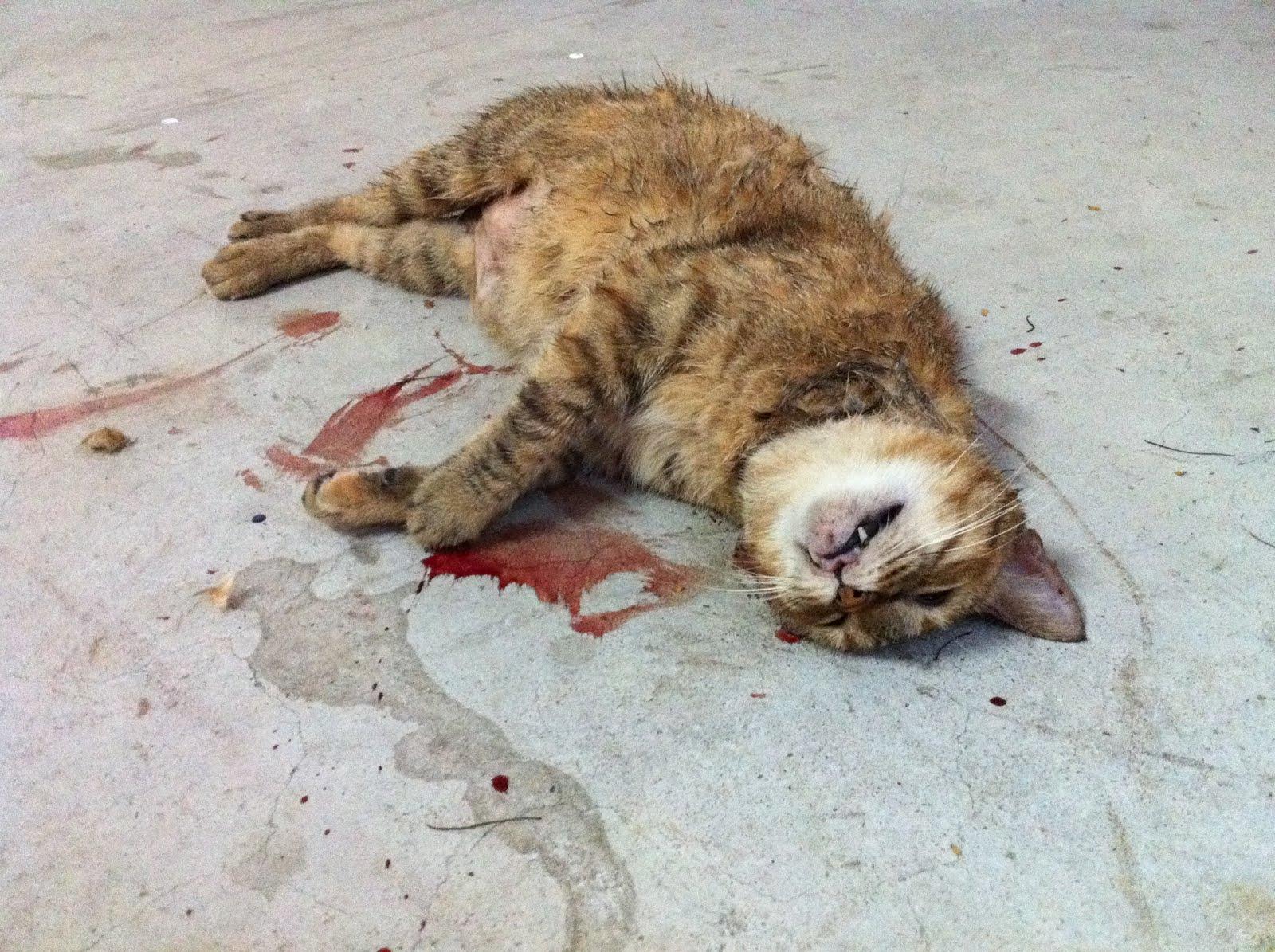 IMG_0064 stop animal abuse serial cat killer in singapore?