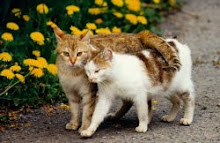 El cielo de los gatos