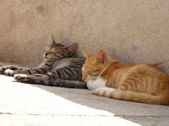Gatos bajo Julio