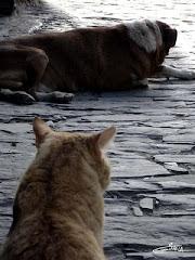 Como Perro y Gato