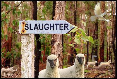 Lambs-2-Slaughter.jpg