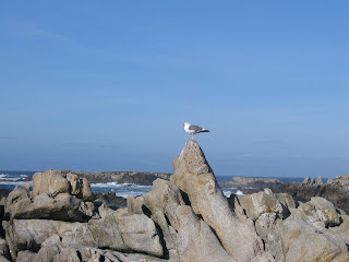 Sea gulls on rocks