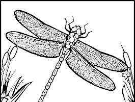 Free Dragonfly Coloring Pages Printable