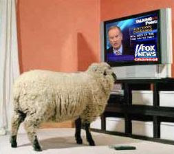 fox news sheep