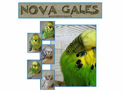NOVA GALES