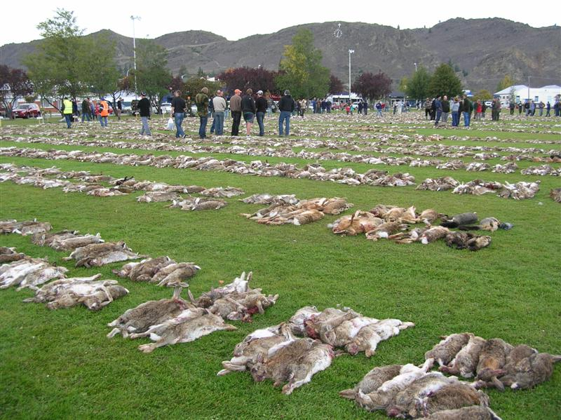 thousands_of_dead_rabbits_line_pioneer_p