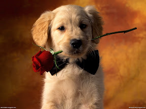 Cute Dogs | nature desktop wallpapers Images Photos