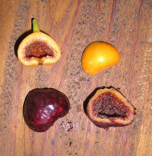 Strange Fig Philippines