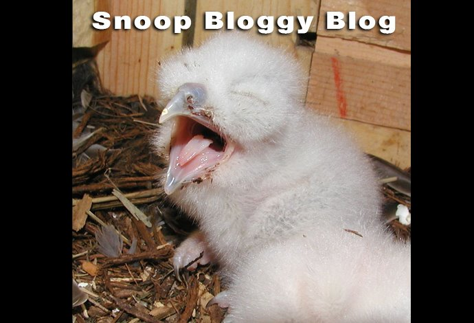 Snoop Bloggy Blog
