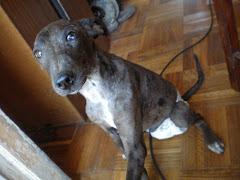 Mi perrito Dalí en pañales